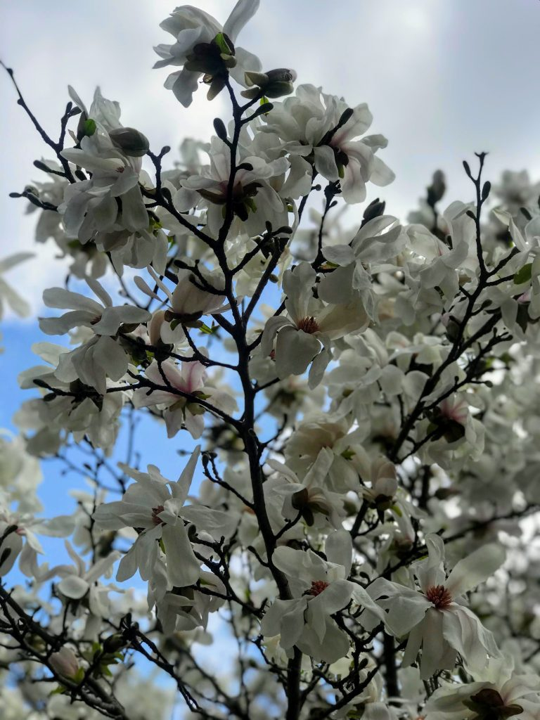 Photo: Blooming tree in Gma's yard